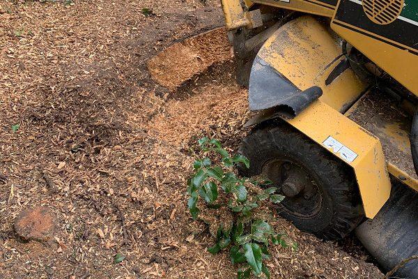 Stubbenfräsen Baumwurzelentferenen